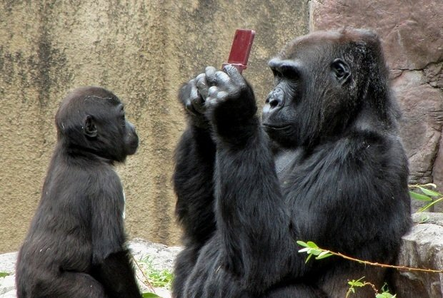 Gorilla_NintendoDS