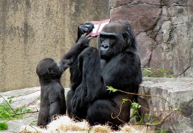 Gorilla_NintendoDS2